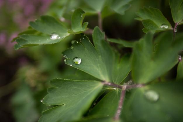 Gocce di pioggia su foglie verdi, carta da parati estiva Foto Premium