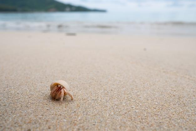 Granchio eremita che cammina sulla bellissima spiaggia. Foto Premium