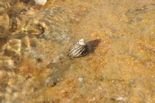Granchio eremita shell Foto Gratuite