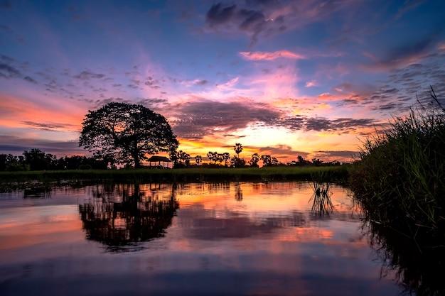 Grande albero e riflessioni sullo sfondo di sunrise acqua. Foto Premium