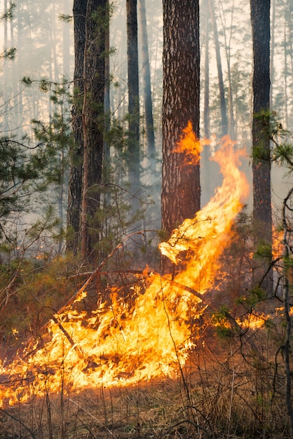 Grande fiamma sugli incendi boschivi Foto Premium