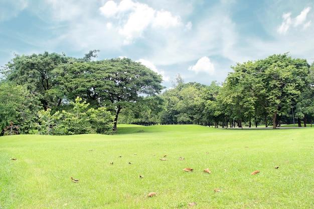 Grandi alberi nel giardino Foto Premium
