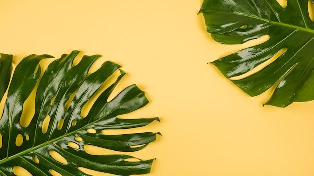 Grandi foglie di piante verdi Foto Gratuite