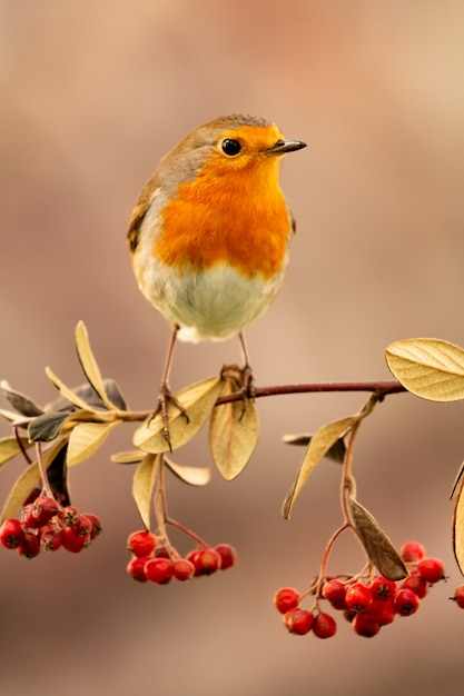 Grazioso uccello con un bel piumaggio rosso Foto Premium