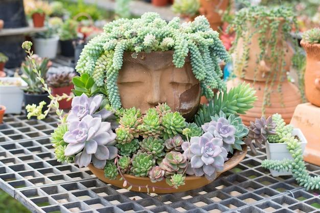 Decorazione Vasi Da Giardino : Gruppo di cactus in una decorazione del vaso in giardino floreale