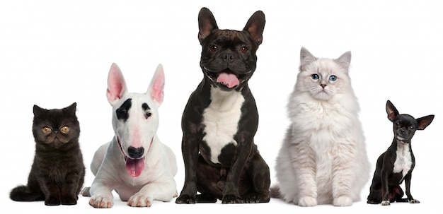 Gruppo di cani e gatti Foto Premium