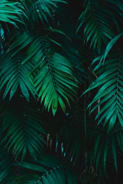Gruppo di foglie verdi tropicali Foto Gratuite