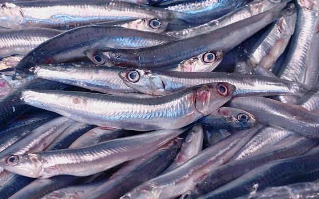 Gruppo di pesciolini Foto Premium