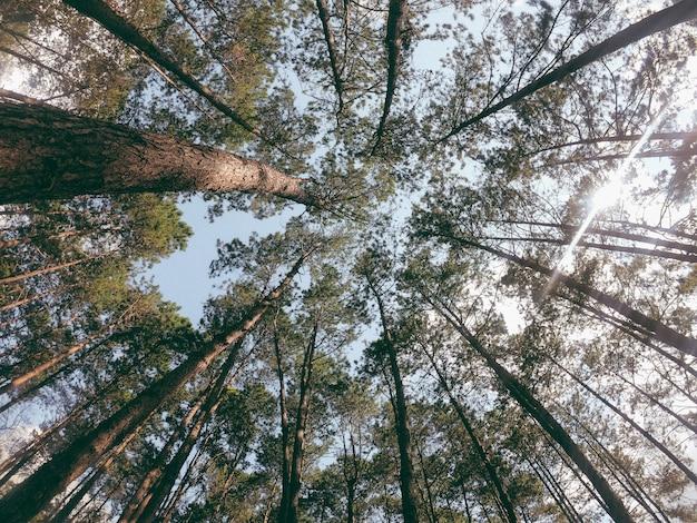 Guardando il cielo attraverso il baldacchino della foresta. Foto Premium