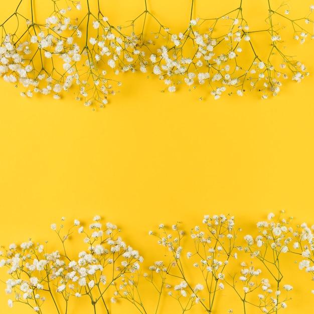 Gypsophila bianco fresco contro fondo giallo Foto Gratuite