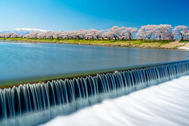 Hitome senbonzakua in giappone, un sacco di fiori di ciliegio con innevate zao montagna sullo sfondo lungo il fiume shiroishi nel castello di funaoka ruin park a sendai, tohoku, giappone. Foto Premium
