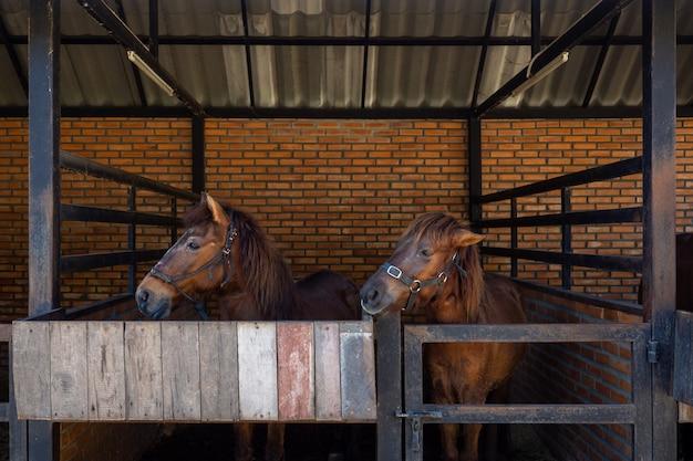 I cavalli si alzano e si rilassano nella stalla. Foto Premium