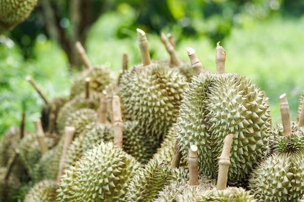 I clienti scelgono di acquistare il durian dai giardinieri di chanthaburi. Foto Premium