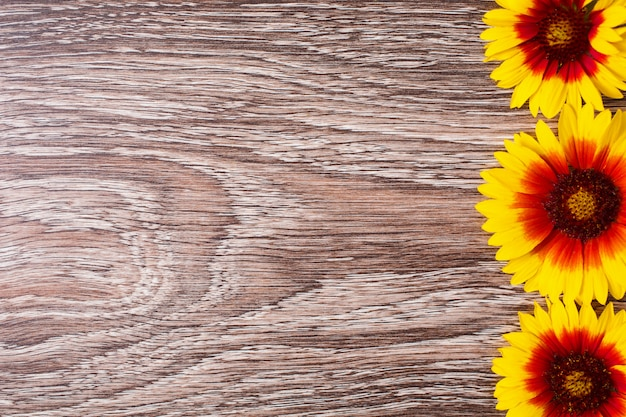 I fiori gialli si trovano sui precedenti di legno. spazio per testo e design. Foto Premium