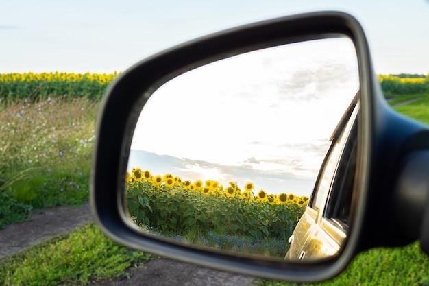 I girasoli si riflettono in uno specchietto retrovisore Foto Premium