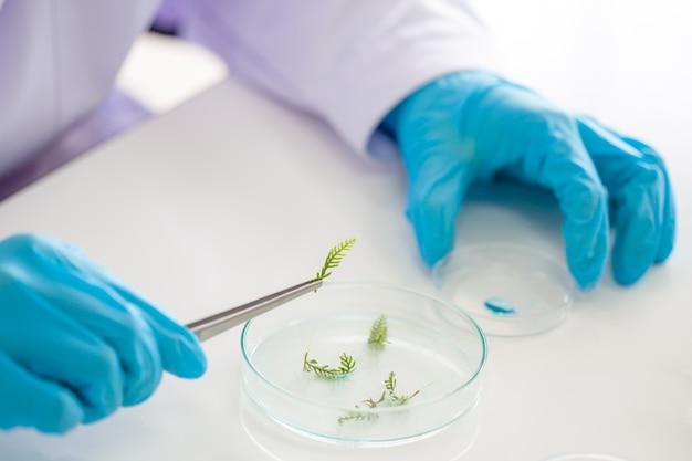 I ricercatori stanno studiando le specie vegetali Foto Premium