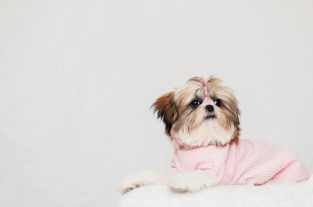 Il bellissimo cucciolo di shih tzu si trova, vestito con un'acconciatura rosa e bella Foto Premium