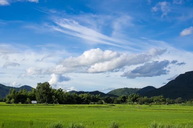 Il campo di riso verde del fesh con la nuvola ed il cielo blu in natura abbelliscono Foto Premium