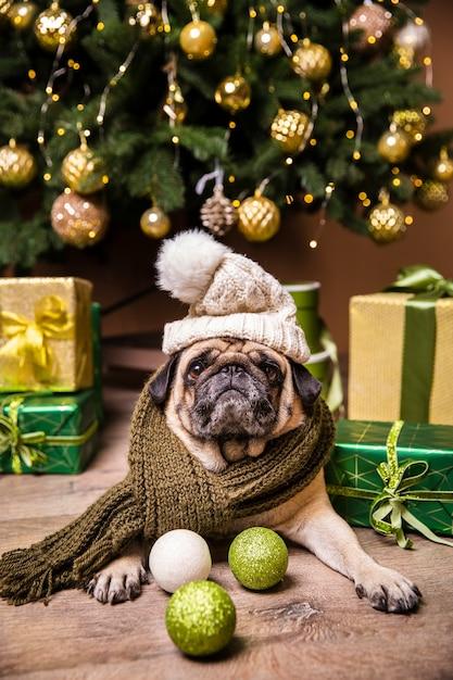 Il cane con il cappello che si prende cura dei regali ha preparato per natale Foto Gratuite