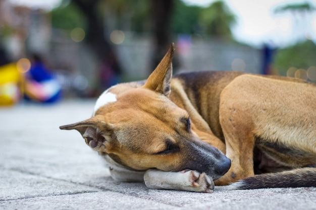 Il cane si sdraiò per terra. Foto Premium
