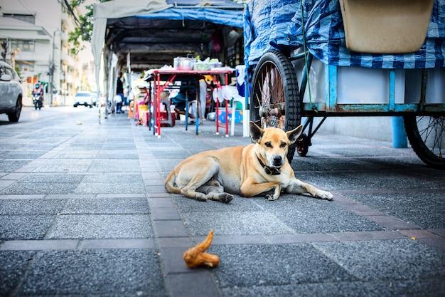 Il cane tailandese che si siede sul pavimento del cemento e guarda il pollo fritto Foto Premium