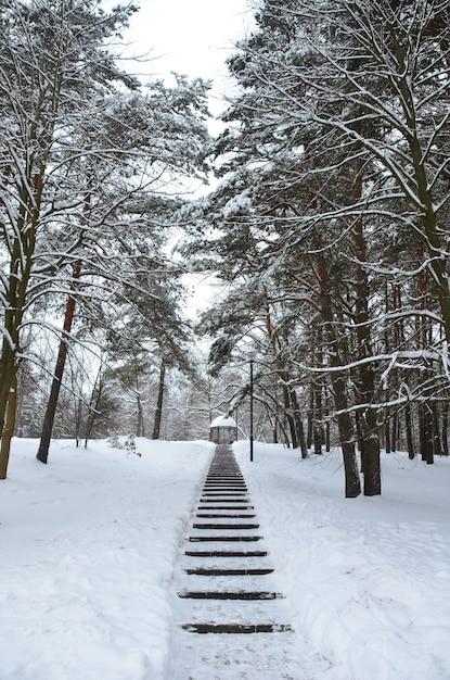 Il ciclone daniella ha portato nevicate Foto Premium