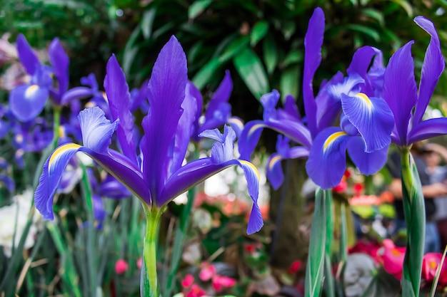 Fiori Color Viola.Il Colore Viola Dei Fiori E Bellissimo Foto Premium