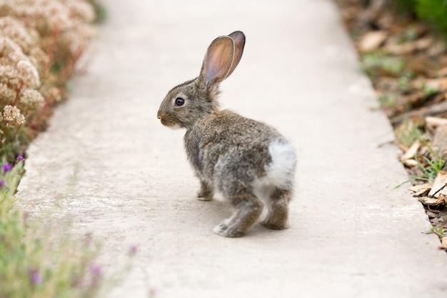 Il coniglio è un bellissimo animale della natura Foto Premium