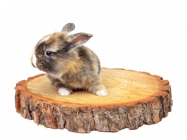 Il coniglio sveglio del bambino sulla sega di legno ha tagliato il pino Foto Premium