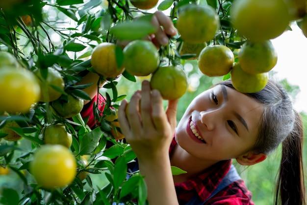 Il contadino sta raccogliendo l'arancia Foto Gratuite