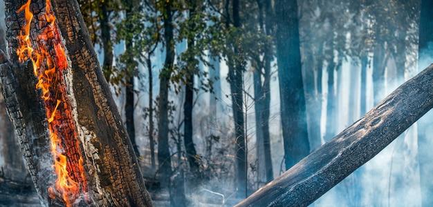 Il disastro degli incendi boschivi sta bruciando causato dall'uomo Foto Premium
