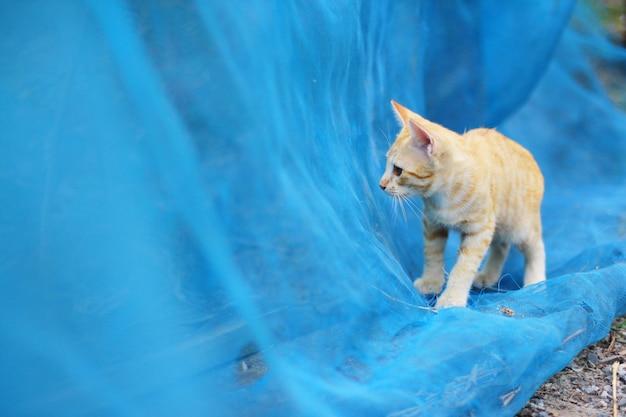 Il gatto a strisce arancio sveglio del gattino gode e si rilassa su rete blu in giardino con luce solare naturale Foto Premium