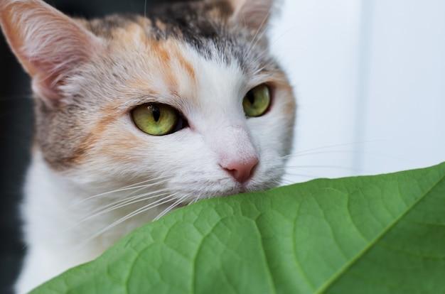 Il gatto del primo piano mangia le foglie verdi Foto Premium