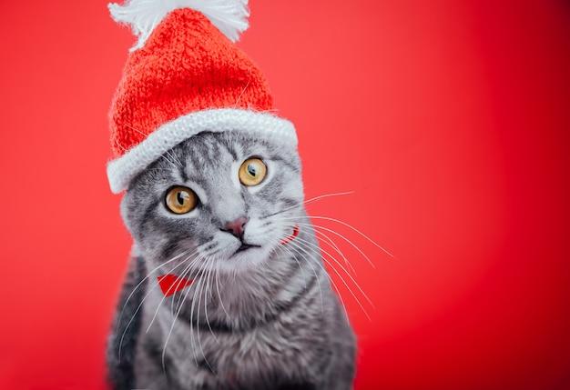 Il gatto di soriano grigio porta il cappello di santa su rosso Foto Premium