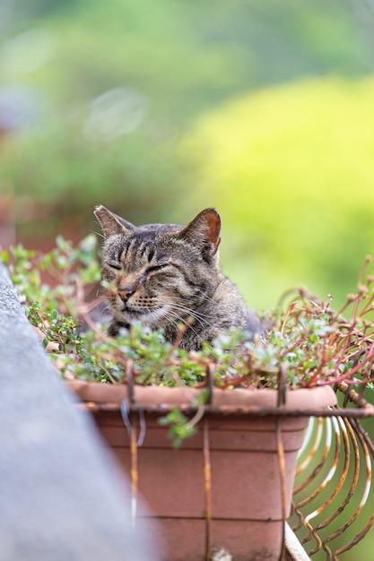 Il gatto è in un vaso di fiori per rinfrescarsi. Foto Premium
