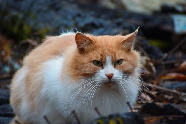 Il gatto è seduto nella casa bruciata. il gatto sta aspettando i proprietari. gatto sopravvissuto dopo l'incendio. Foto Premium
