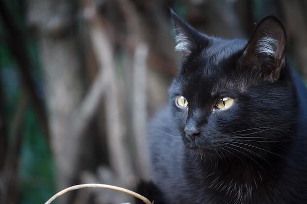Il gatto nero dello shorthair del primo piano con gli occhi gialli si siede sul tetto della tettoia e si guarda intorno con attenzione Foto Premium