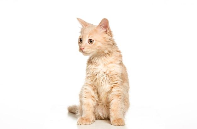 Il gatto seduto da solo Foto Gratuite
