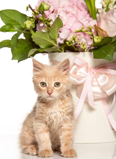 Il gatto sul muro bianco con fiori Foto Gratuite