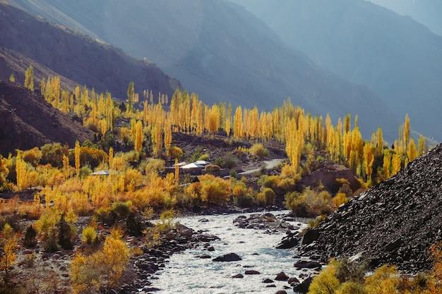 Il giallo lascia gli alberi nella stagione di autunno lungo la catena montuosa Foto Premium