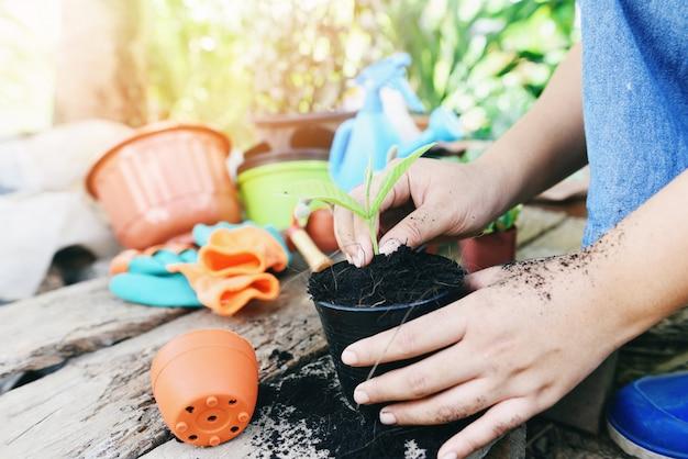 Il giardinaggio che pianta una piantina delle piantine di un albero sta crescendo in terreno in vaso con la donna della mano aiuta l'ambiente. Foto Premium