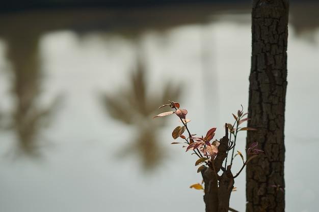 Il giovane albero cresce sul ceppo di albero tagliato nel nuovo concetto di probabilità Foto Premium