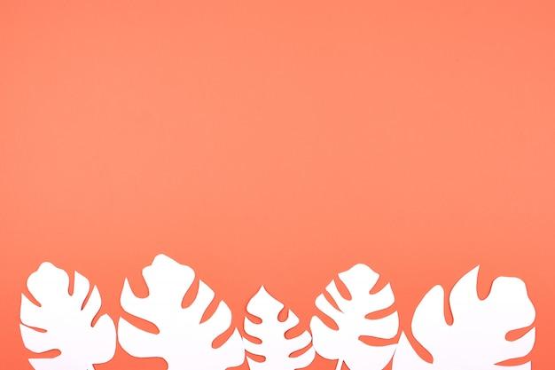 Il libro bianco monstera lascia sul corallo Foto Premium