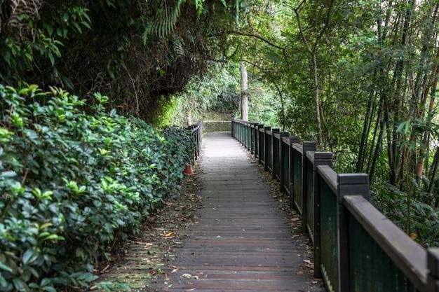 Il modo della camminata dal legno della natura per la camminata nel lago moon del sole a taiwan Foto Premium