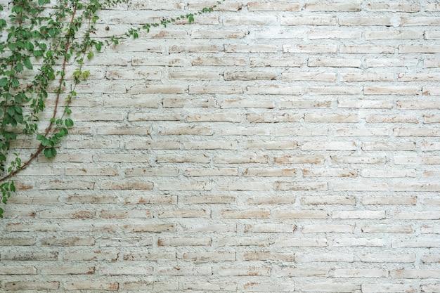 Il muro è fatto di mattoni e poi dipinto di bianco. Foto Premium