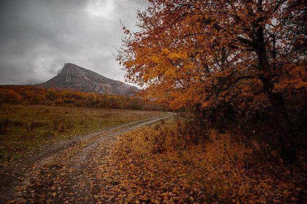Il paesaggio autunnale di montagna con foresta colorata Foto Premium