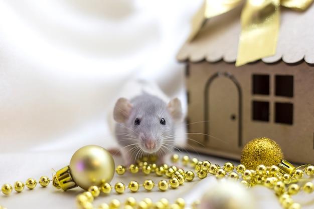 Il piccolo ratto si siede vicino alla casa in miniatura accanto alle decorazioni dorate di natale Foto Premium