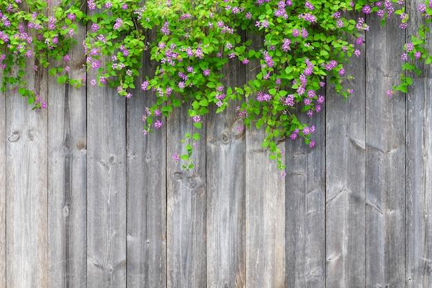 Il recinto di legno grigio di brown con la bella pianta delle foglie verdi e i fiori viola rosa rasentano con lo spazio vuoto della copia. strutturi il fondo di vecchie plance di legno con la pianta rampicante. Foto Premium
