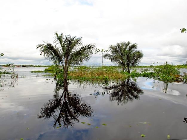 Il rio delle amazzoni in perù e brasile, sud america Foto Premium