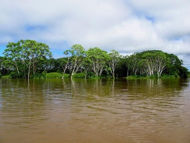Il rio delle amazzoni in perù, sud america Foto Premium